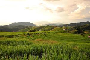 campos de arroz al atardecer foto