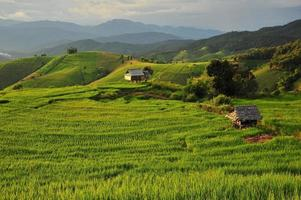 Rice Terraced Fields Landscape on the Mountain