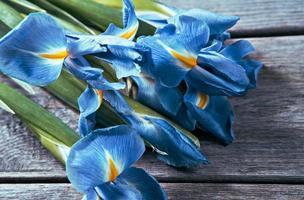 Blue flowers irises