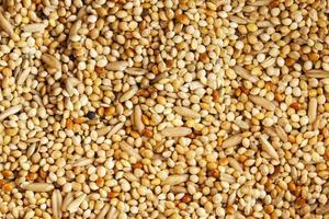 sfondo di semi e cereali
