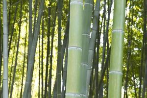 Bamboo Grove photo