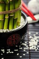 Chopsticks and a lucky bamboo plant photo