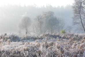 Beautiful morning with frost on plants. Autumnal landscape. photo