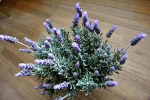 Lavender plant in full bloom against rustic wood