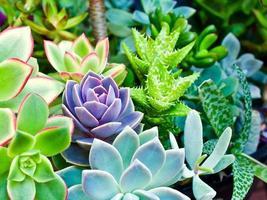 Succulent Oasis photo