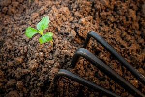 planta en crecimiento