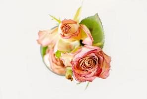 dried pink roses photo