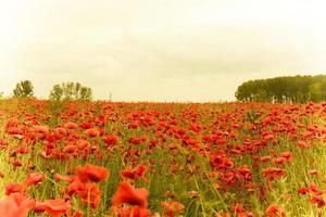 imagem de bela paisagem de campo de papoula de verão com efeito retro