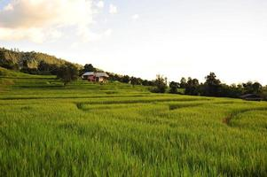 Rice Terraced Fields Landscape on the Mountain