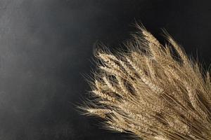 wheat on black background photo