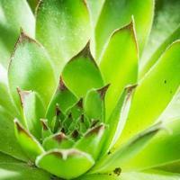 succulent plants longevity grass