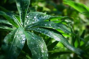 Plant with dew drops photo