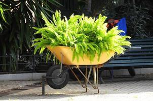 Wheelbarrow full of Plants