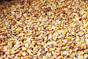 Dish full of dried yellow corn seeds photo