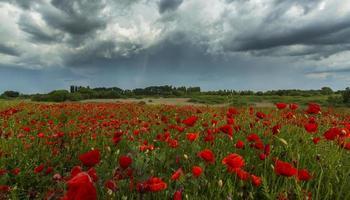 prachtige landelijke velden in de zomer