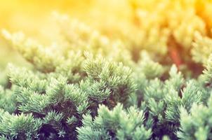 licencia verde foto