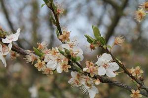 fiorire
