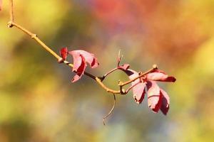 Multi-colored fall.