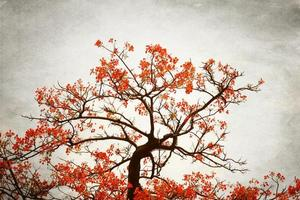 red flower blooming on the tree in vintage