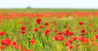 hermosos campos rurales en verano