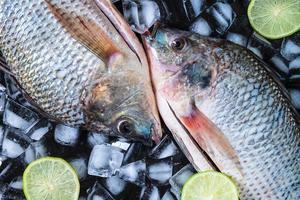 Pescados de tilapia fresca sobre hielo con limones