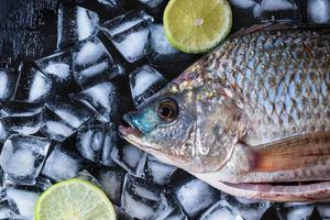 Pescado tilapia fresco sobre hielo con limones