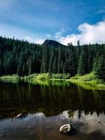 Green pine trees in Oregon photo