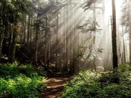 Sun rays in the forest photo