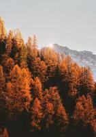 árboles en la montaña en otoño