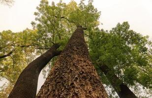 grands arbres en forêt photo