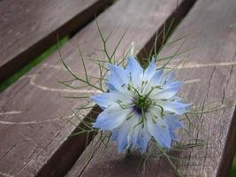 Blue flower on a wooden bench