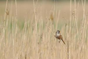 Sparrow in grass field