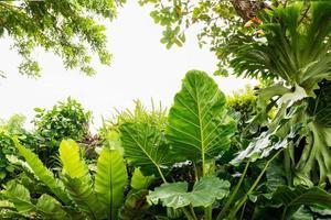hojas verdes aisladas sobre fondo blanco