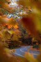 View of a road through autumn leaves