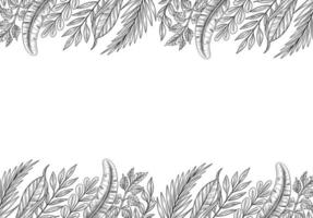 Hand Drawn Tropical Plants Leaf Sketch Background vector