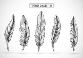 Hand Drawn Feather Sketch Set Design
