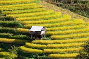 Green Terraced Rice Field at Ban Pa Bong Peay