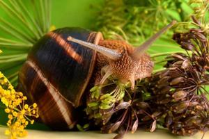 Portrait of a snail on a background of plants