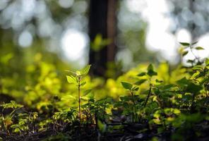 Cerca de una planta joven que brota del suelo