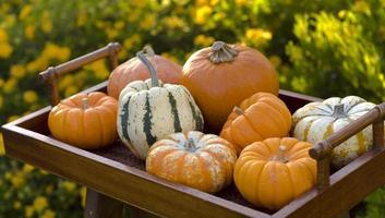 Thanksgiving & Halloween Autumn Gourds & Pumpkins Fall Garden Background