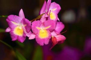 rama de orquídea foto