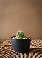 Mini cactus on bamboo screen. Japanese style. photo