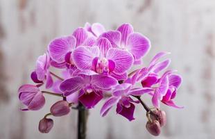 Purple orchid photo