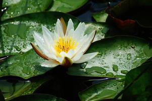waterdruppels op blad na zomerregen