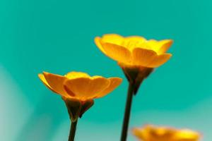 Abstract yellow flowers photo