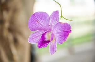 orchid blossom in the garden photo