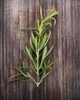 Branch Of Rosemary
