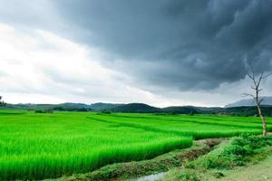 paddy fields and storm photo