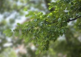 Branch of elm