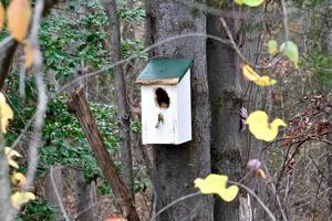 süßes Vogelhaus